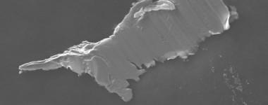 polymer analysis by SEM