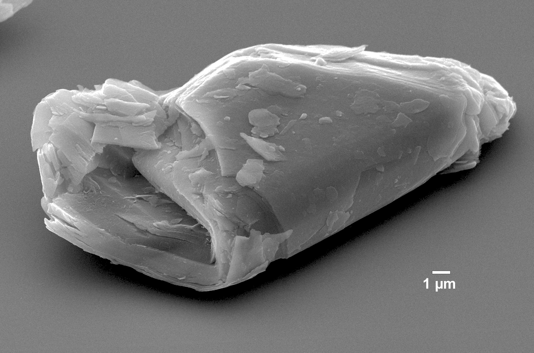 sem analysis of folded talc
